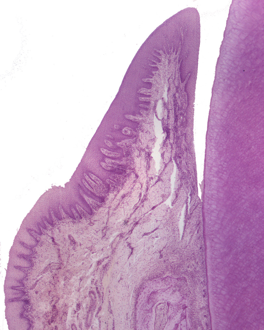 Microimage